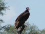Kruger Birdlife