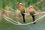 ss_birds_01