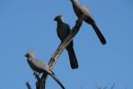 ss_birds_05