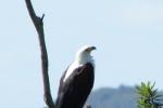 ss_birds_12