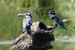 ss_birds_19