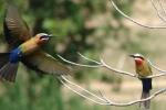 ss_birds_20