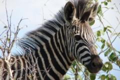 Kruger Wildlife