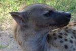 ss_mammals_06