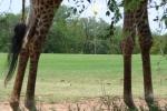 ss_resort_giraffe5