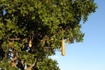 ss_resort_tree